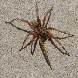 Уничтожение пауков в Тынде